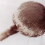 Qoobo ユカイ工学 コミュニケーションロボット 癒し しっぽ 猫 クッション セラピー