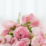 花 花束 長持ち 鮮度保持剤 切花延命剤 フラワーフード 花工場切花ロングライフ液 切花活力剤 ハイポネックス原液 キープフラワー